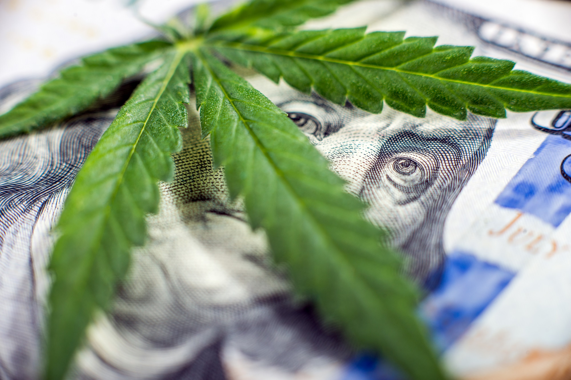 Labor And Employment Deep Dive: Marijuana And The Workplace