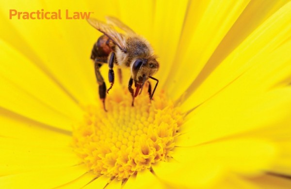 Practical Law Bee