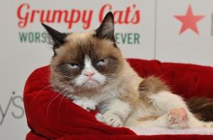 Grumpy Cat (Photo by Steve Jennings/Getty)