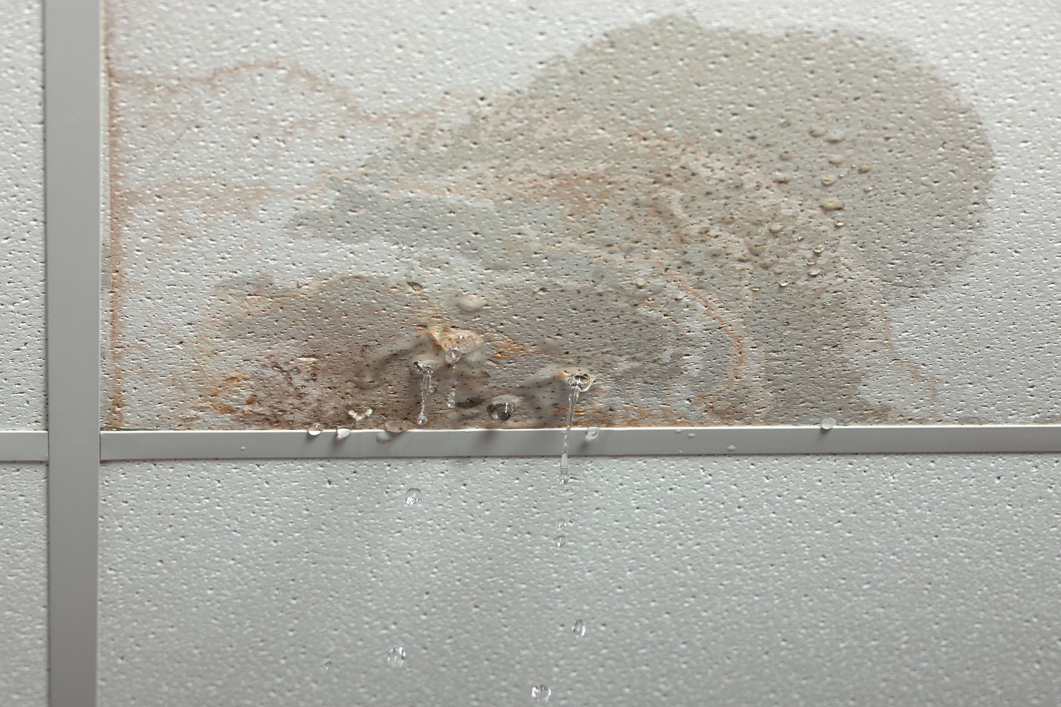 Bar Exam Stopped Due To Constant Ceiling Leaks Wet Test