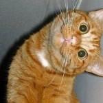 Stupid_cat_3-300x3151