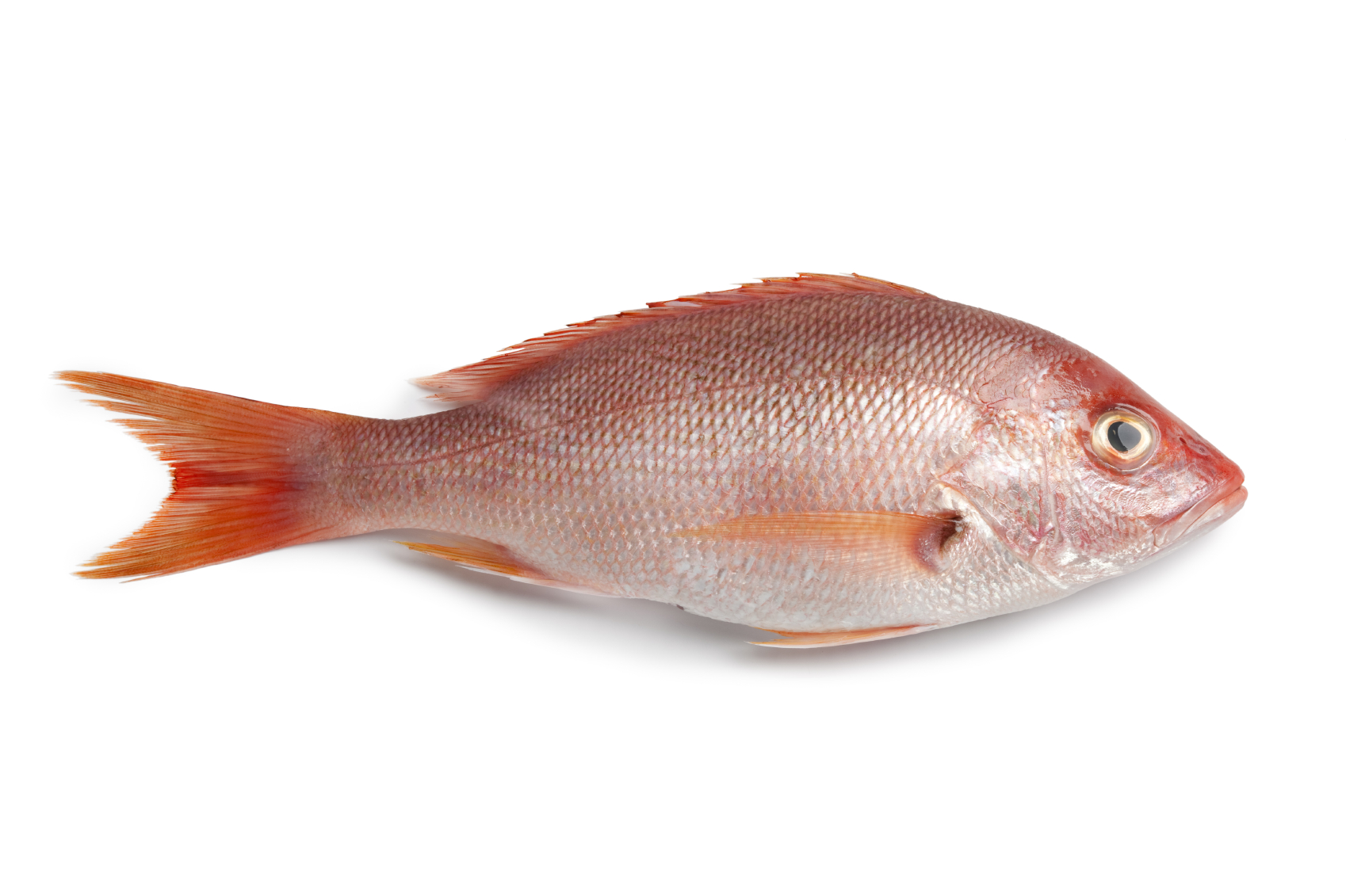Stealthy cybersecurity threats a conversation with the for Fish law firm